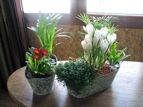Озеленение интерьера, горшок который цветет