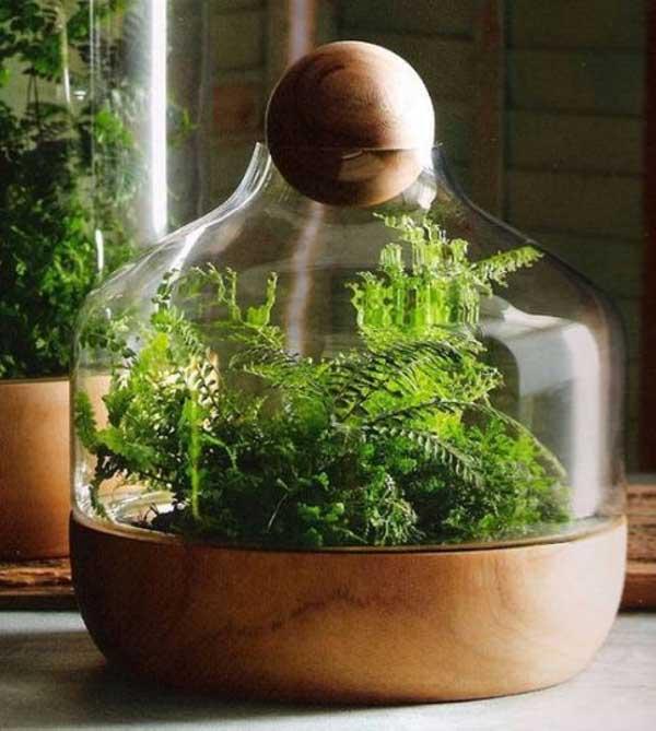 Озеленение интерьера, флорариум
