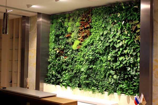 Озеленение интерьера, цветущая стена