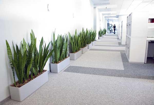 Польза от озеленения офиса