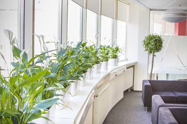 Озеленяем офис