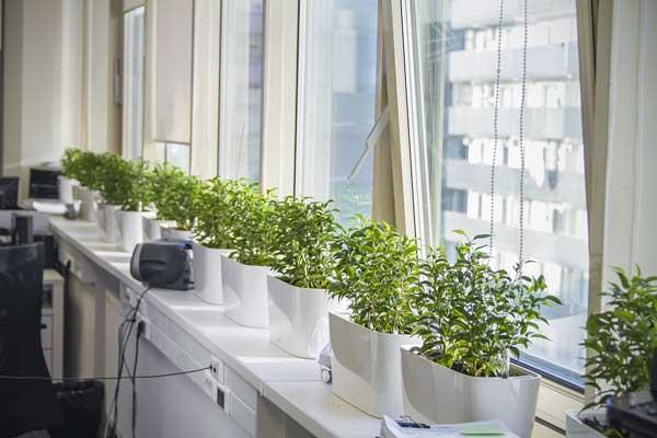 Особенности озеленения офиса